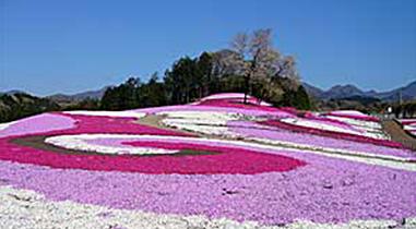 Misato ground pink